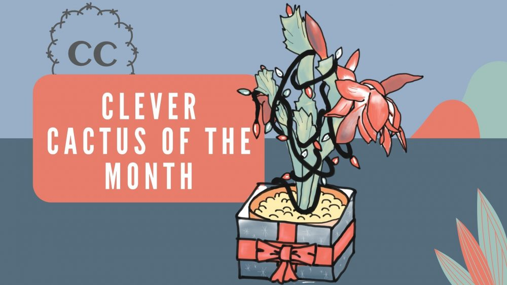 Christmas Cactus - Clever Cactus of the Month